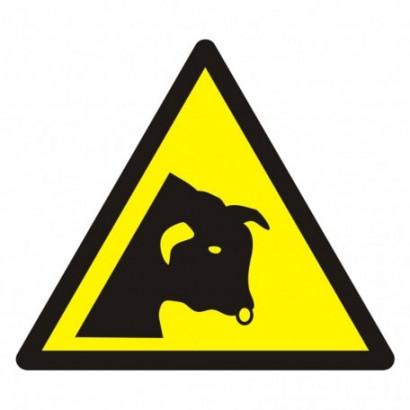 Ostrzeżenie przed bykiem
